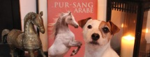 Lolotte - Qalo & Lolotte - un cheval, un chien