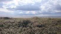 Baie de Somme (crédit photo © Audrey S)