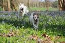 """Les Loups-Loups & Lolotte - Jacinthes des bois - """"Attrape moi si tu peux"""" - Des amis pour la vie (© Audrey S)"""