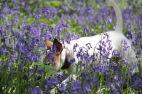 Traité d'équitation pour ma bien aimée. R.G. Binding - La sélection de Lolotte - Photo © Audrey S