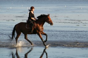 La plage - Qalo et Lolotte.jpg