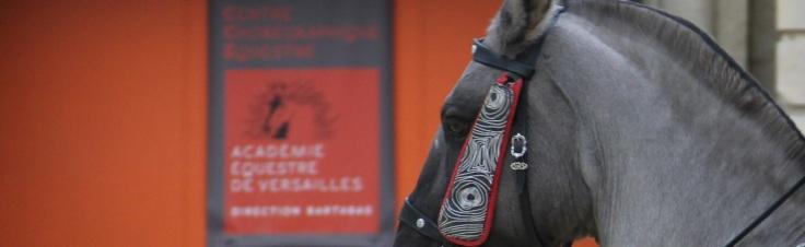 academie-equestre-de-versailles-la-voie-de-lecuyer-by-audrey-s