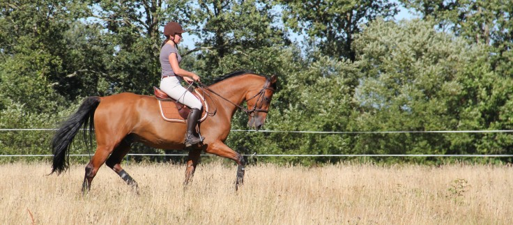 coach-qalo-et-lolotte-cavalcade-des-blogs-by-audrey-s