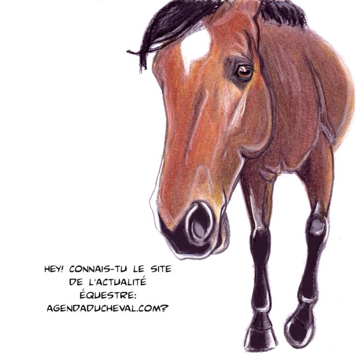 agenda-du-cheval-qalo-lolotte-11-by-audrey-s