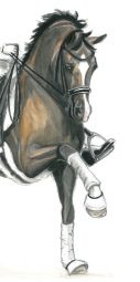 dressage-valegro-by-audrey-s-3