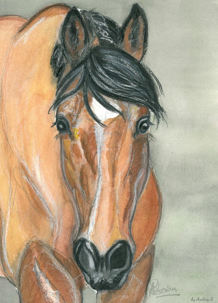 La curiosité chez le cheval