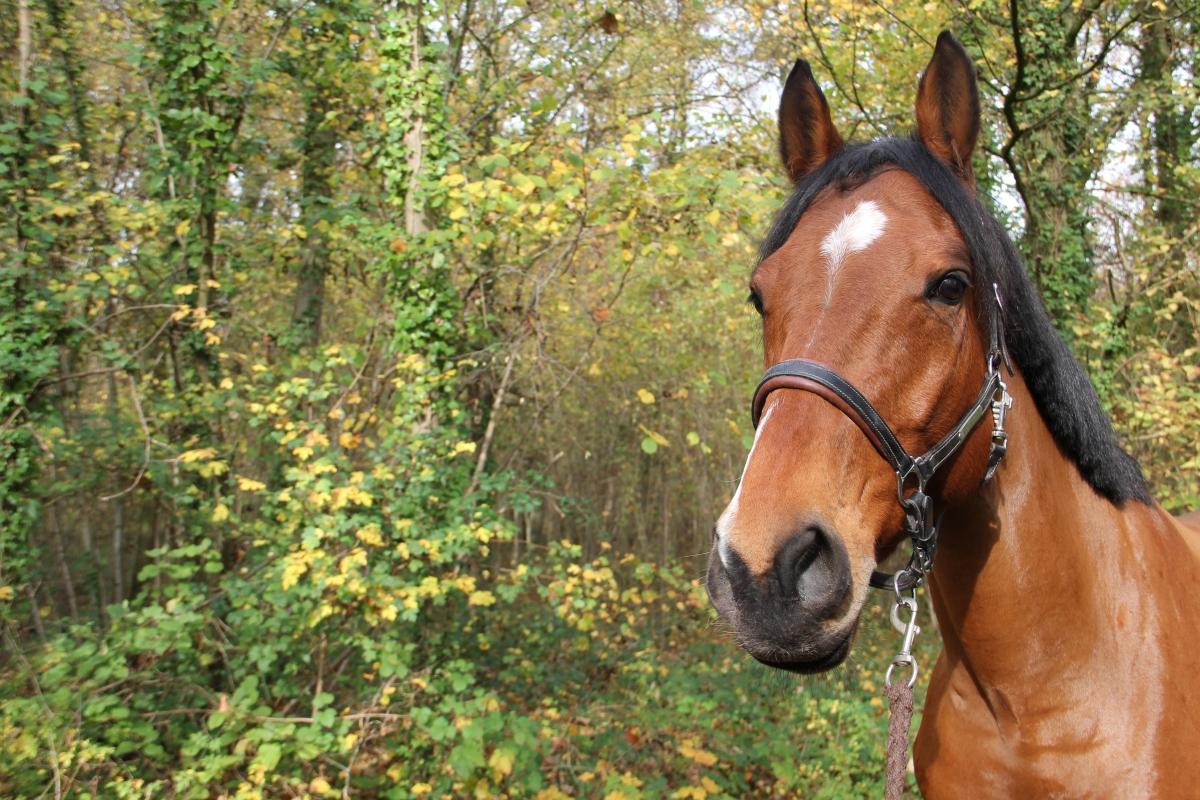 Cavalcade des Blogs: Les bénéfices d'une pause dans son équitation